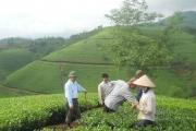 Số công nhân khiếu nại Công ty chè Phú Đa tiếp tục tăng