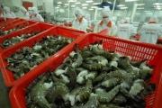 Xuất khẩu tôm sang thị trường EU tăng mạnh