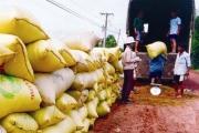 NHNN yêu cầu đáp ứng nhu cầu vốn cho vay thu mua thóc, gạo vụ Đông Xuân